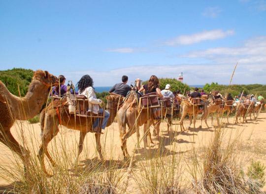 paseos-camello-1
