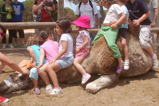 Paseos en camello por Doñana