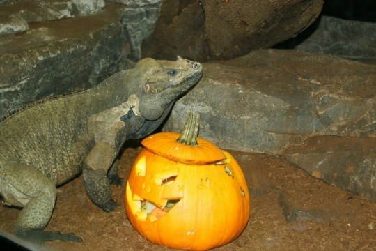 Halloween 2014-Zoo Aquarium Madrid-3