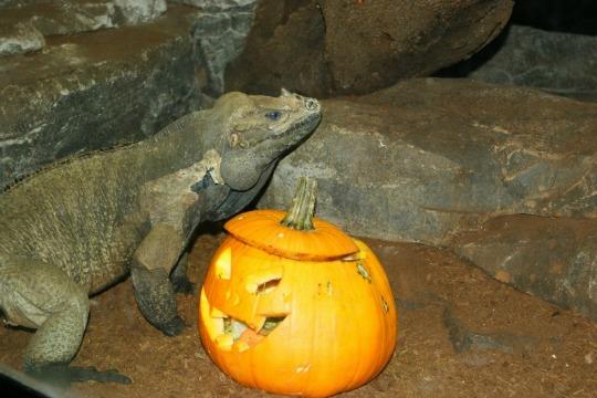 Halloween 2014-Zoo Aquarium Madrid-3
