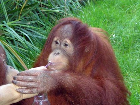 Zoo de Santillana del Mar Cantabria