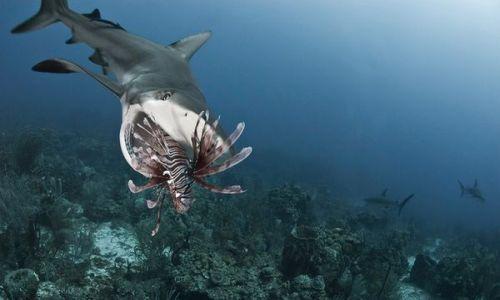 Dormir con tiburones en el Museo Marítimo del Cantábrico
