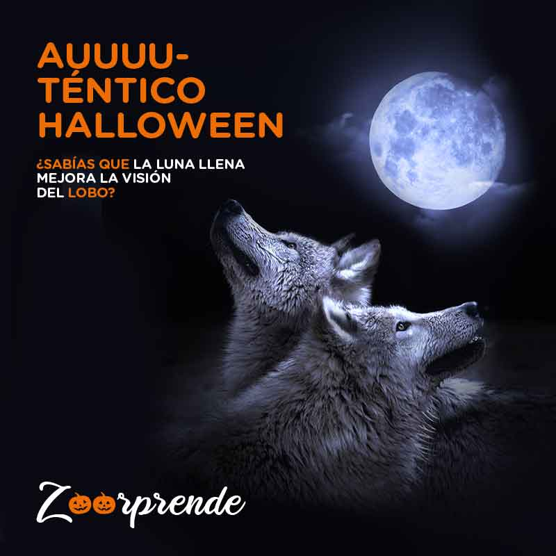 Halloween en Zoo Aquarium Madrid 2019